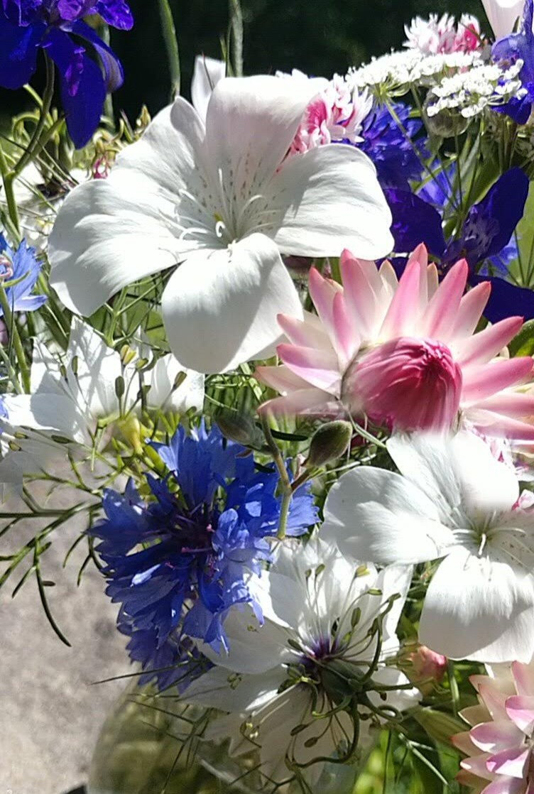 Cornflower mixing in with nigella, agrostemma and everlastings