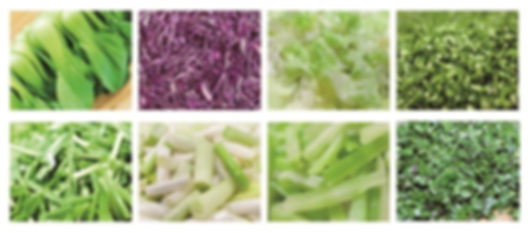 Leaf Vegetable Cutter