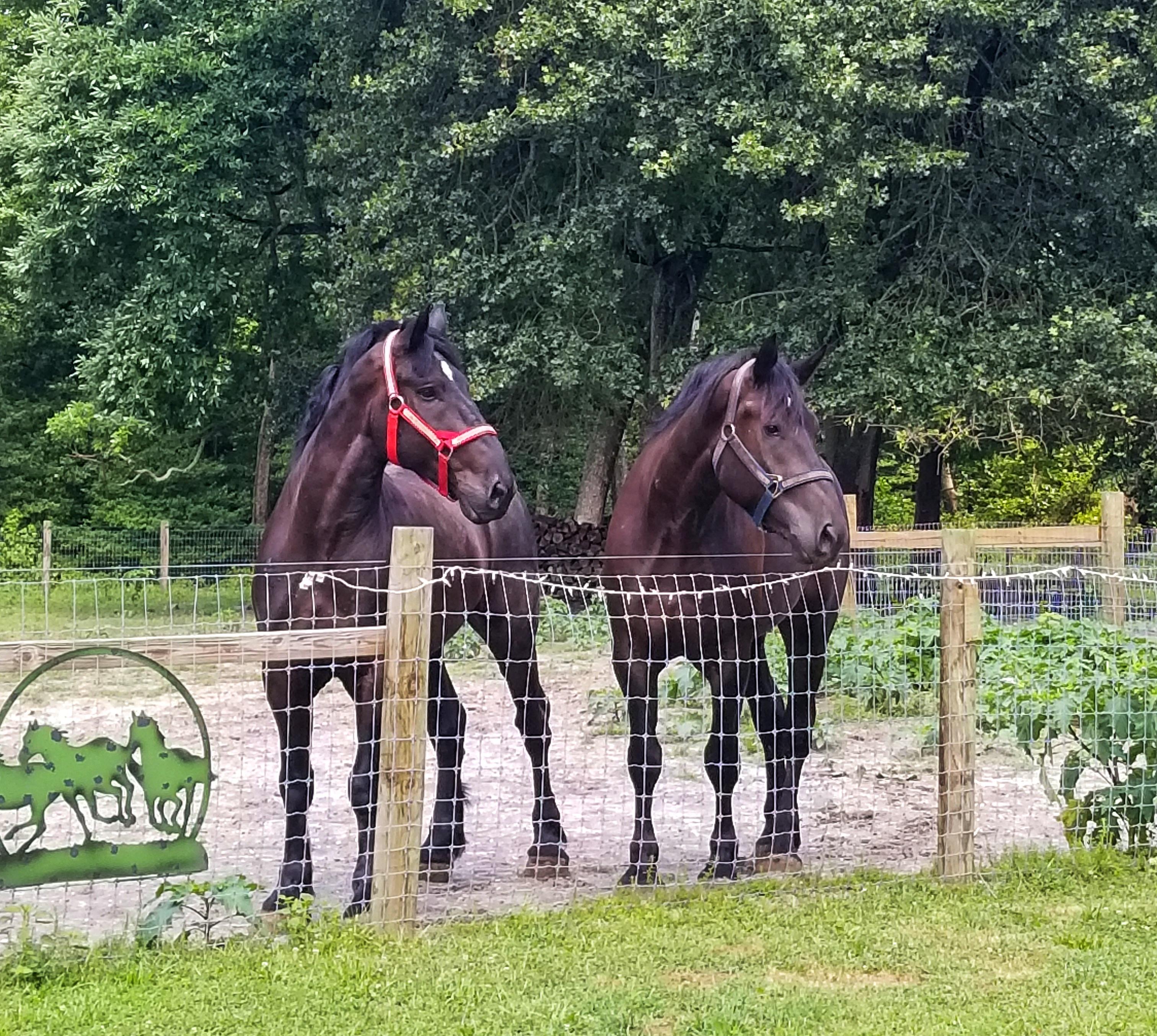 horses2