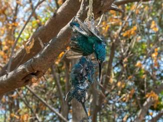 Penembak burung di mangrove Wonorejo akan ditindak tegas