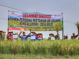Pertamina EP Asset 4 Field Cepu Resmikan Panen Perdana Pertanian SRI Organik, guna tingkatkan pereko