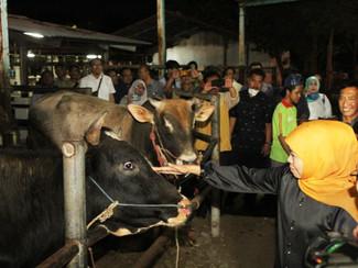Gubernur pastikan stok daging sapi di Jatim aman