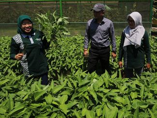Panen raya sayur dan buah di Mini Agrowisata