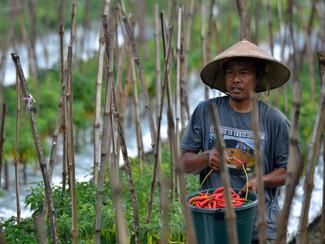 Eksistensi kelompok tani Sumber Welut, benteng ketahanan pangan Surabaya