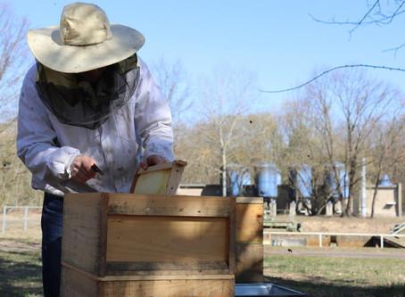 Honig vom Wasserwerk Erkner