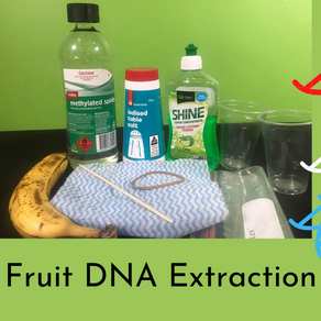 Fruit DNA Extraction