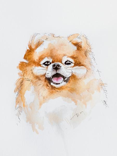 martynazet_dog-1-2.jpg