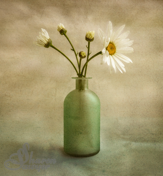Large white daisies in a green bottle