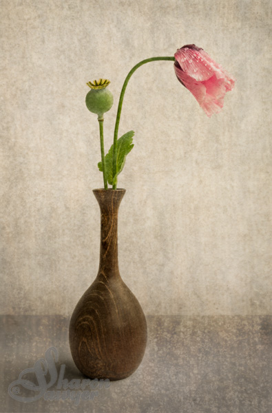 Poppy in Wooden Vase