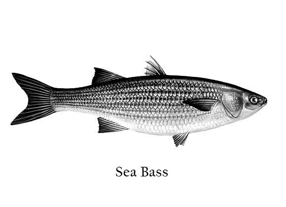 Sea Bass 100 – 150g