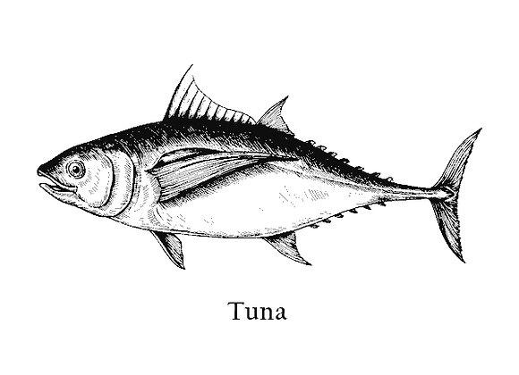 Sahimi Tuna loin steak 180 – 230g