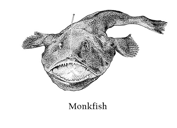 Monkfish 120g – 150g