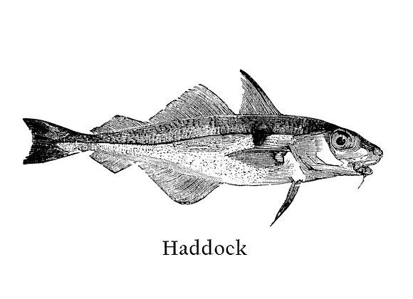 Haddock 150 – 200g