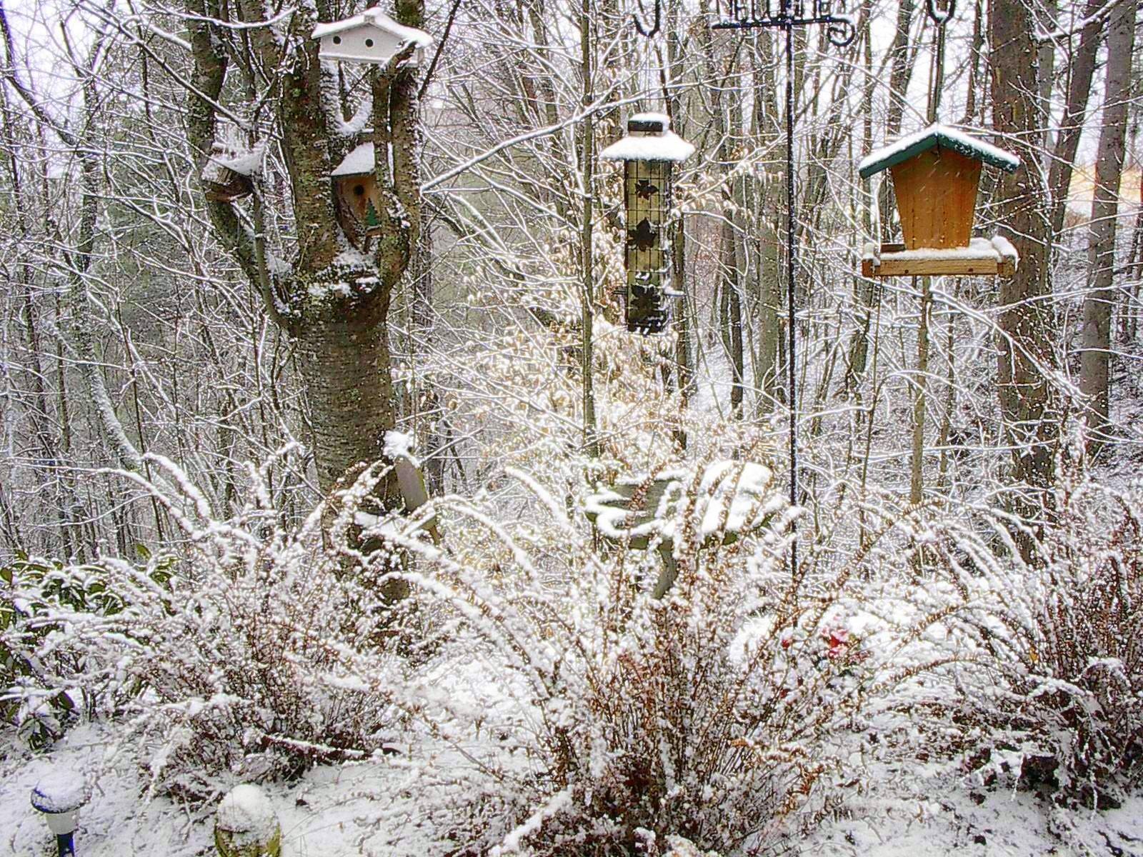 snow on bird houses