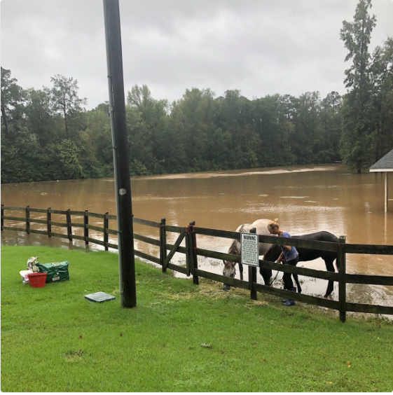 Saving Horses in High Water Matthew