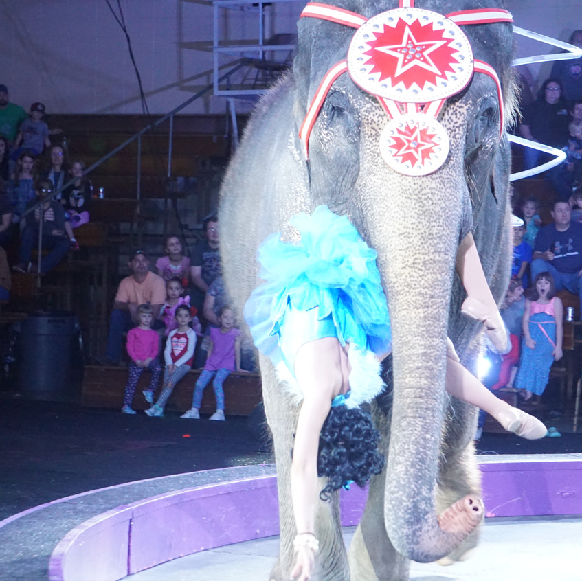 The Royal Hanneford Circus