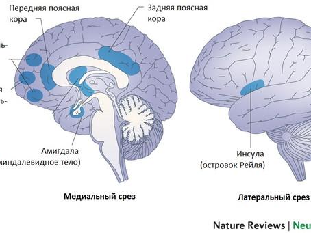 Нейробиология сострадания