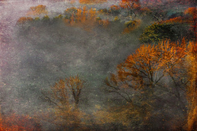 'The Forest Mists'
