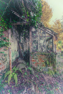 Ferns and Decay