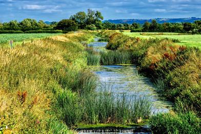 The River Brue, Baltonsborough