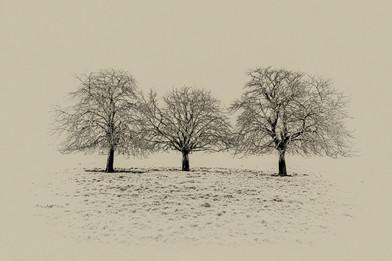 'Three Trees'
