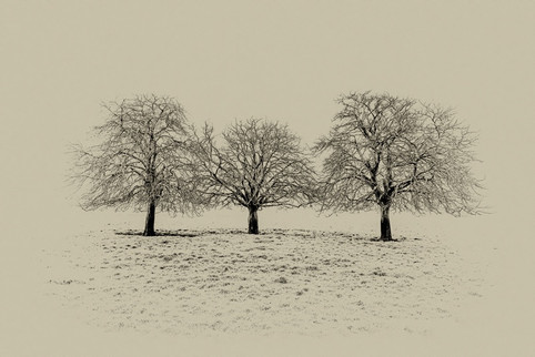 'Three Trees'