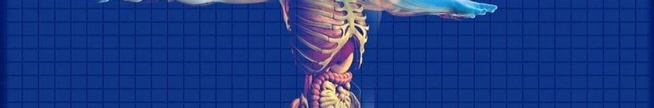 human-digestive-system-163714_1280_edite