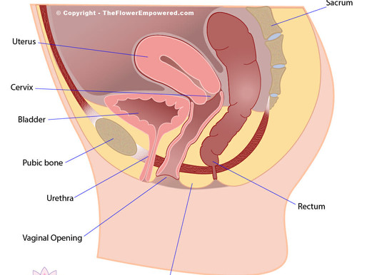 Prenatal Care Part 1: The reproductive system, hormonal changes and pelvic girdle pain.