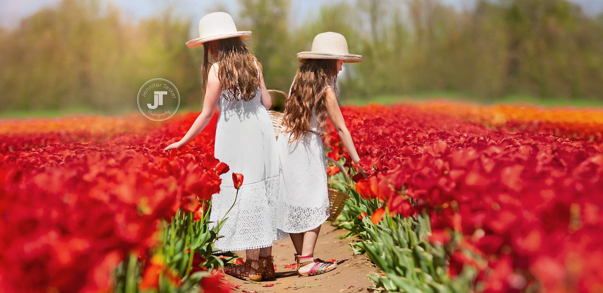Tulips--4 copy.jpg