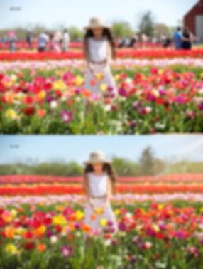 Tulip 2019 (4 of 6) copy copy.jpg