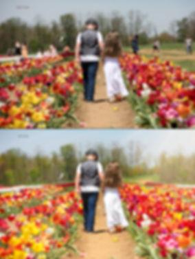 Tulip 2019 (4 of 6) copy.jpg