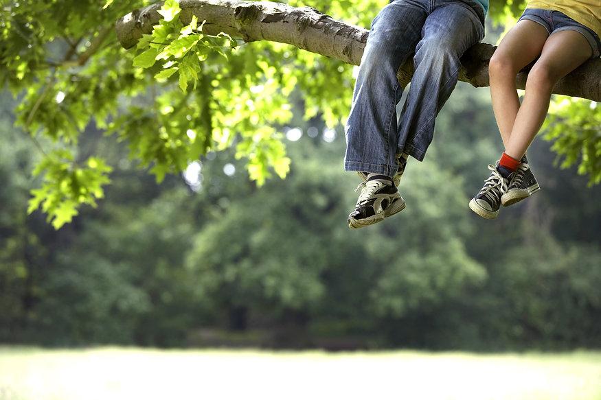Tree safety risk