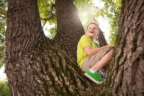 Tree Safety Testing Peace of Mind