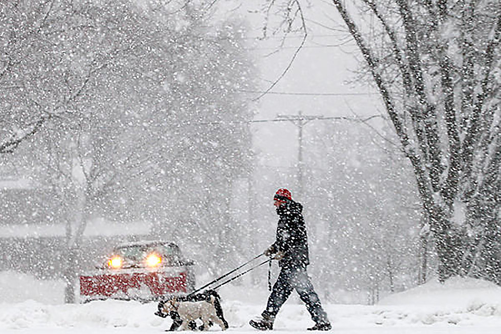 winter-storm-snow-birds.jpg