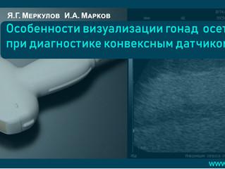 Особенности визуализации гонад осетровых при диагностике конвексным датчиком