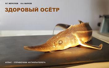 Cover_ZO_Atl_rus.jpg