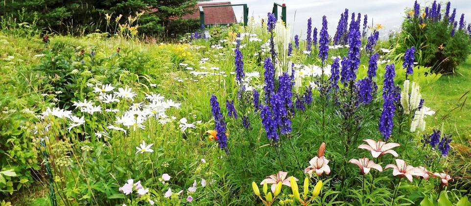 peakflowering2.jpg