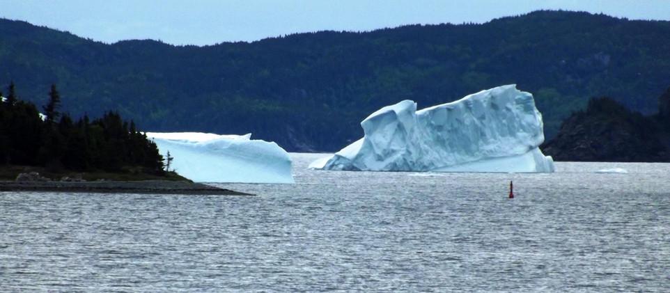 Coffee Cove icebergs.jpg