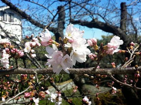I have found spring