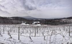 Snowfall Vineyard Pennsylvania Wine