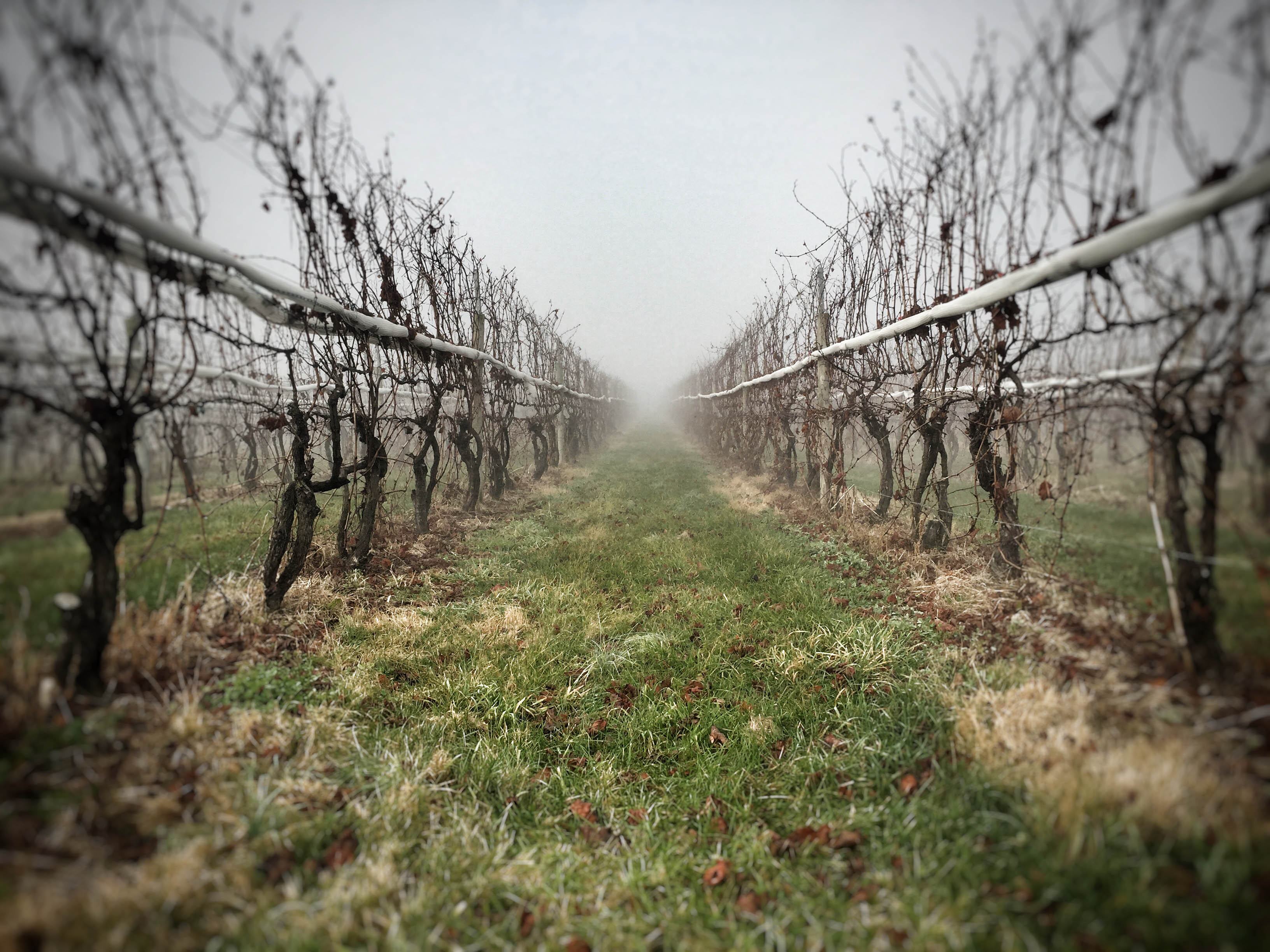Winter Vineyard Pennsylvania Wine