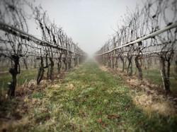 Winter Vineyard Pennsylvania Wine