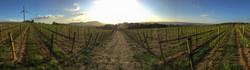 Vineyard Grapes Pennsylvania Wine