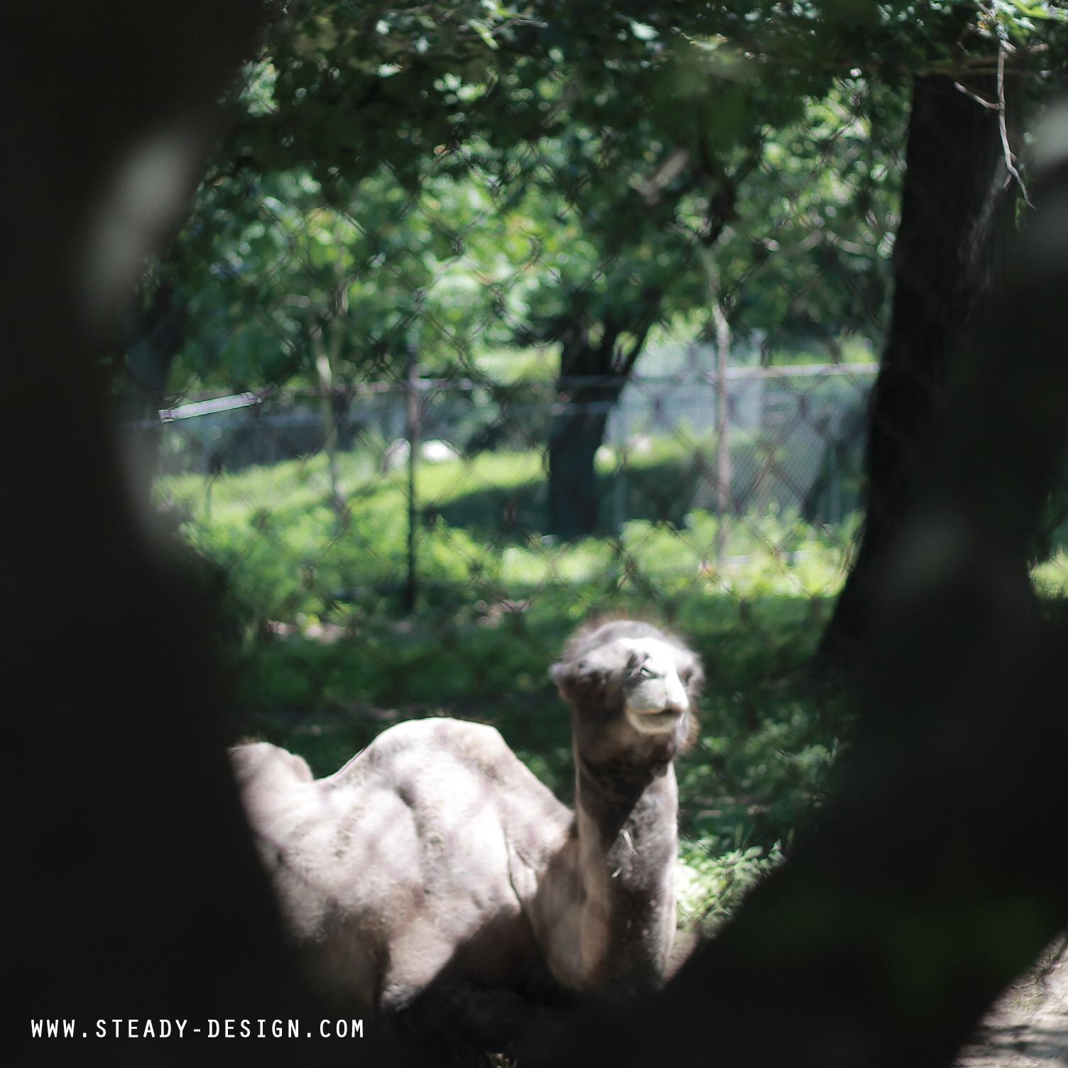 CAMEL reminising