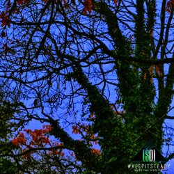 ABSTRACT COLOR TREE STOCK
