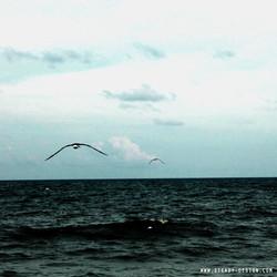 BIRDS AND OCEAN FACE