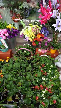 Kvetinárstvo DADA 17