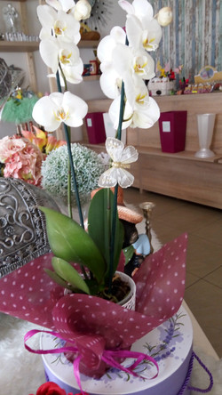 Kvetinárstvo DADA 1