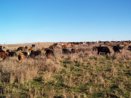 Appreciation comes before Depreciation in the Cow Business