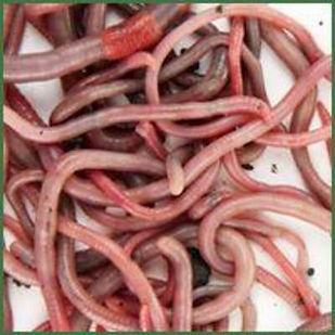 worm-random-full.jpg
